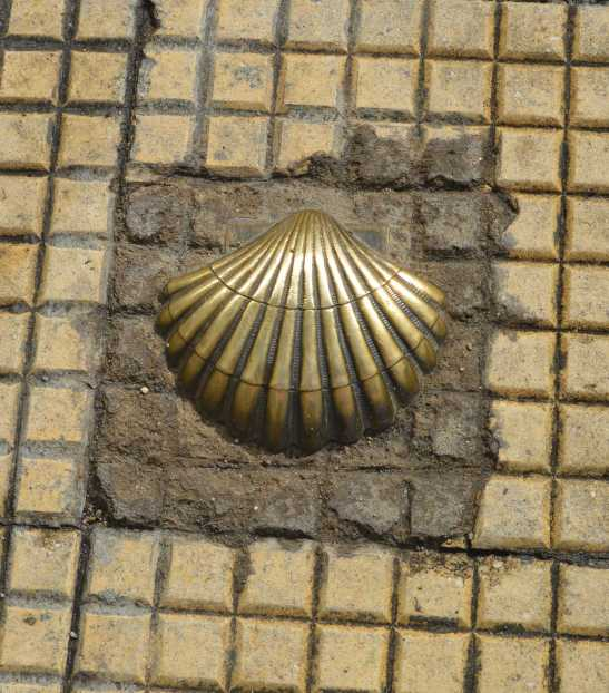 Scallop in Sidewalk